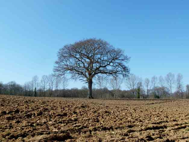 Blue sky, a tree and soil