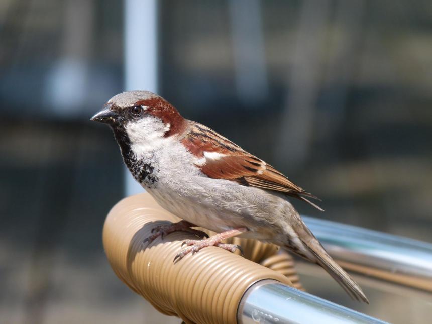 Bird on a chair