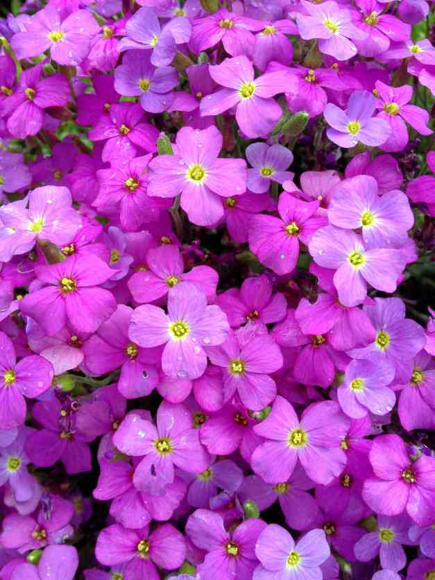 Profusion of Pink and Purple
