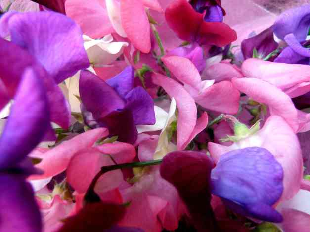 Sweet pea bouquet low res