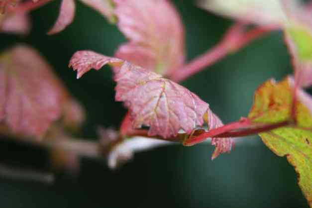 Autumn leaves 4 low res