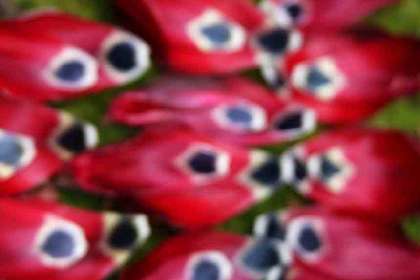 Abstract tulips low res