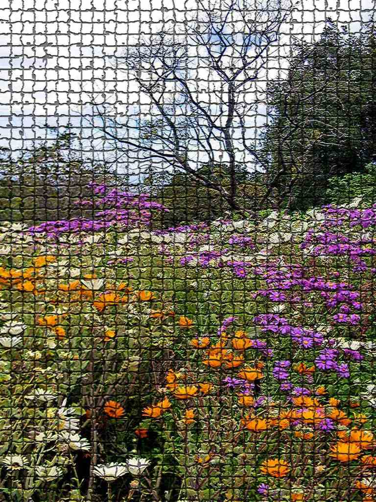 African Spring mosaic low res