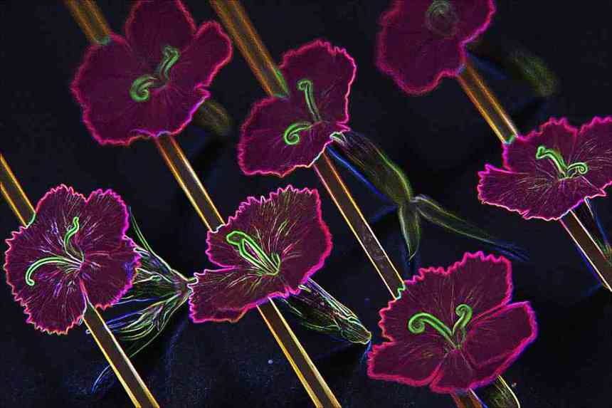 Artistic flowers glow 3 low res