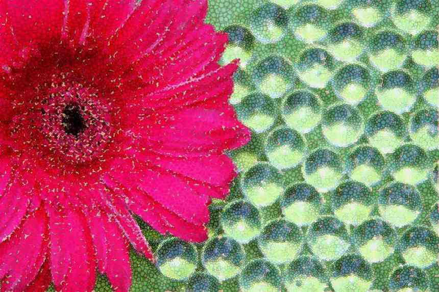 Mosaic  Gerbera low res