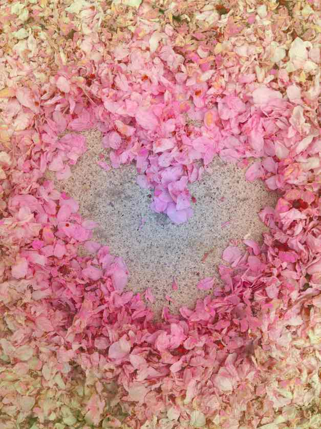 Cherry blossom petal heart low res