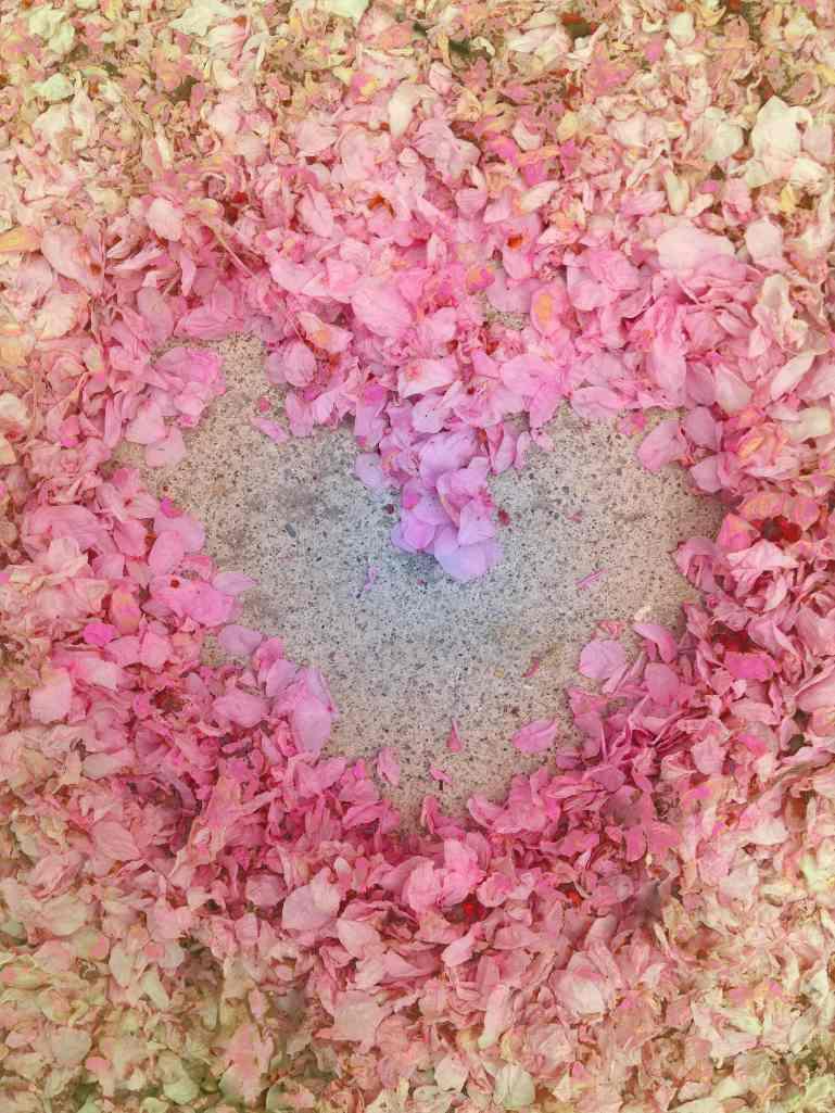 Cherry blossom petal heart low res