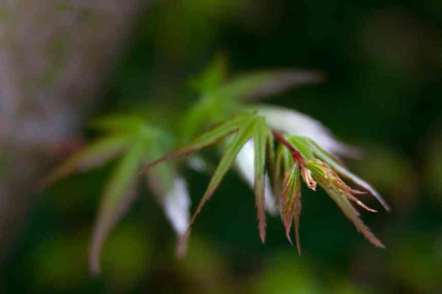 Green 4 low res