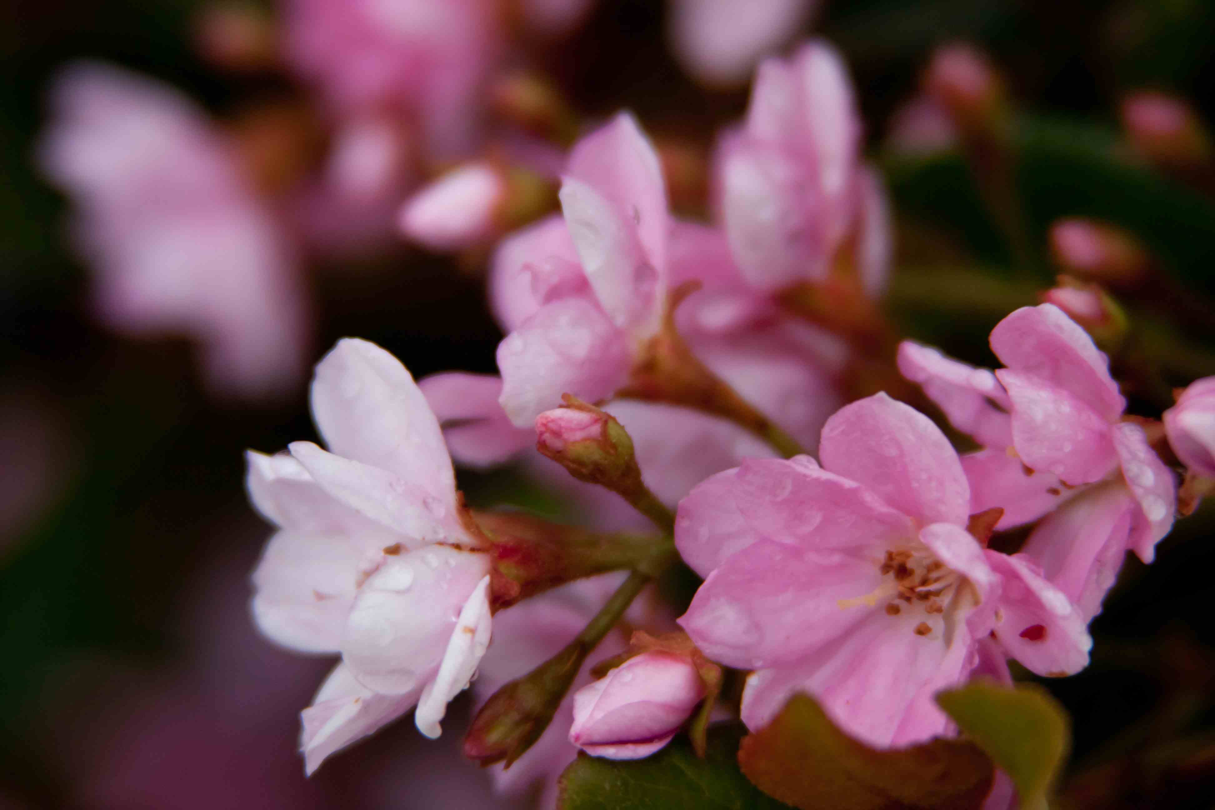 hawthorn online dating An n english language  under the hawthorn tree u  environment for features dating back to famine times history children can learn about life, society, work.