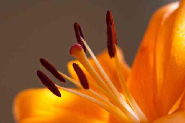LA lilies 2 low res