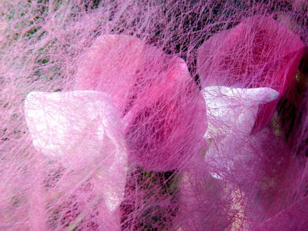Sweet pea pink veiled low res