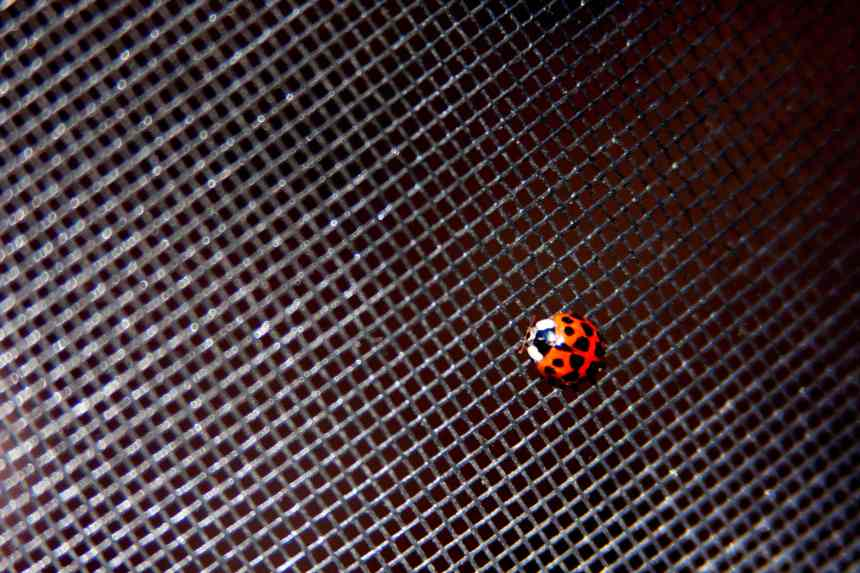 Ladybird on screen low res