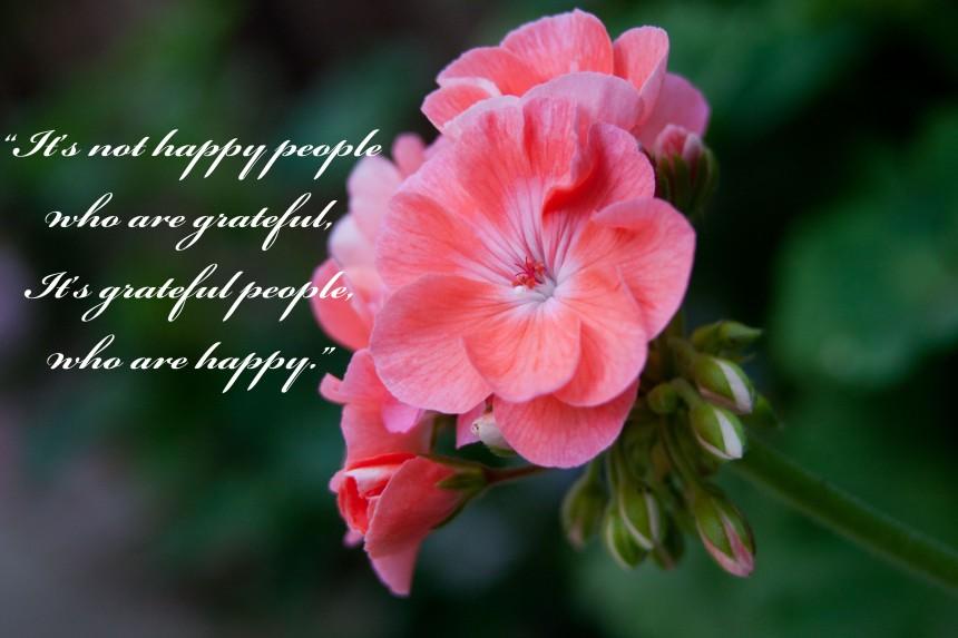 Grateful geraniums