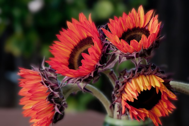 Sunflowers Orange 2