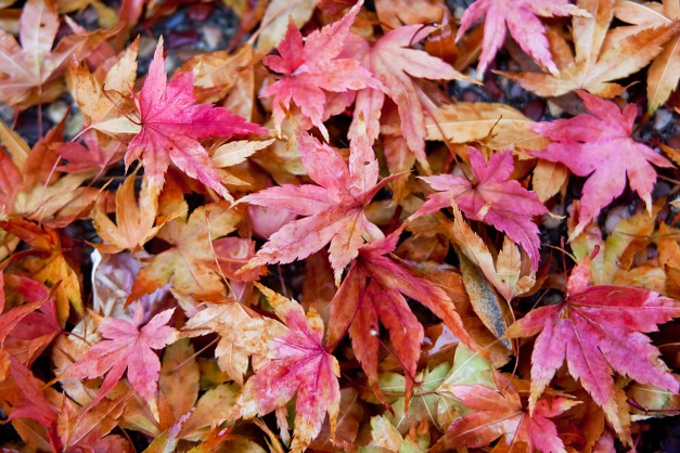 Fall leaves 4