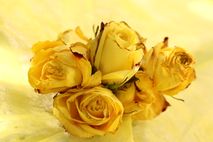 Vintage roses IMG_3283