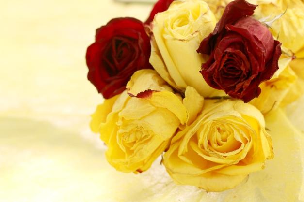 Vintage roses IMG_3294