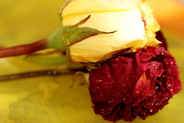 Vintage roses IMG_3360 - Copy