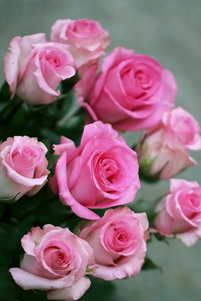 Roses pink bunch