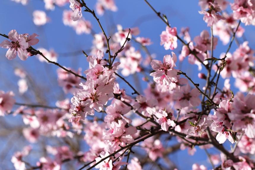 Blossoms Spring 2