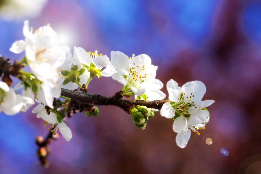 Spring sprig