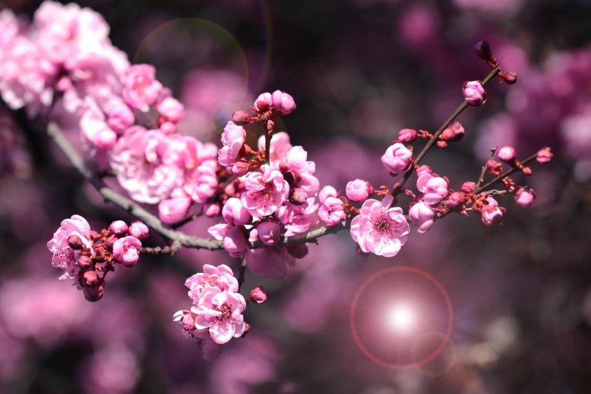Blossom flare