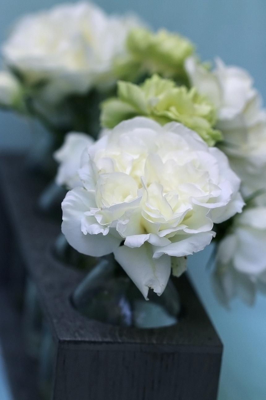 Vase bottles roses carnations 2