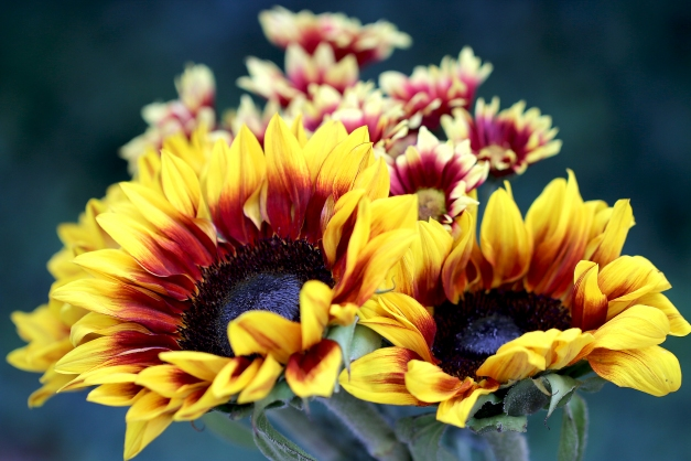 sunflowers-and-chrysanthemums-2