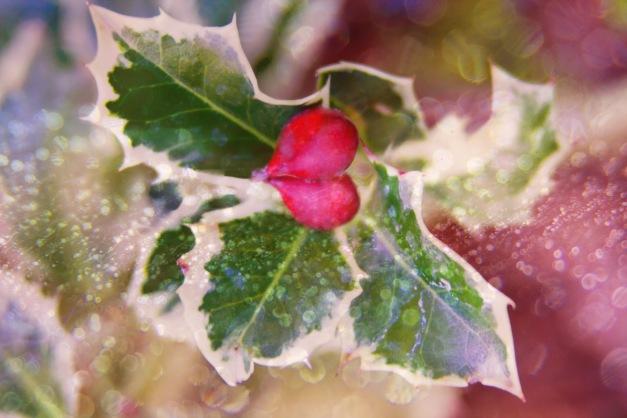 festive-holly