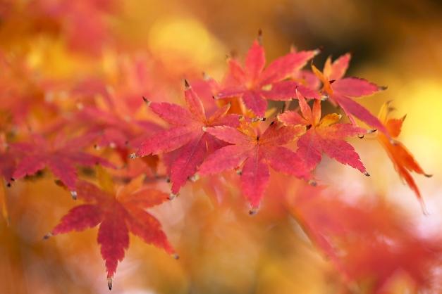 leaves-autumn-2