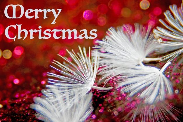 seeds-gerbera-festive-greeting